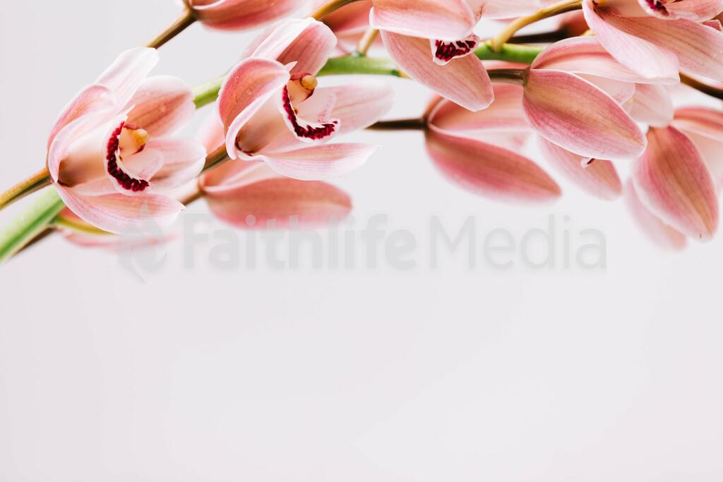 Florals 99 preview