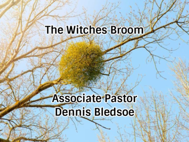 The Witches Broom