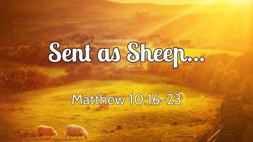 Sent as Sheep...
