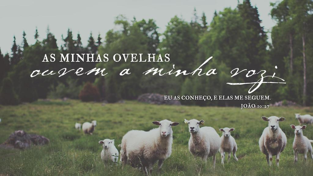 João 10.27 large preview