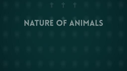 Nature of animals