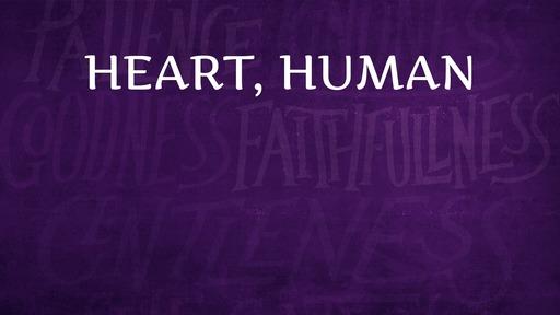 Heart, human