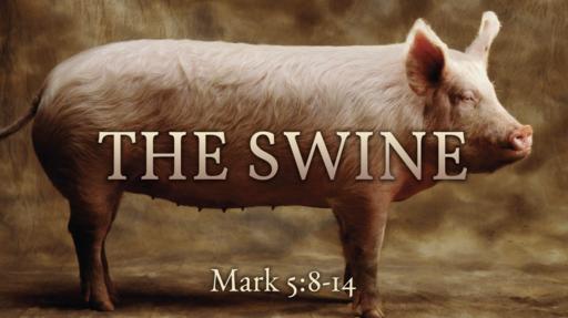 602 - Swine