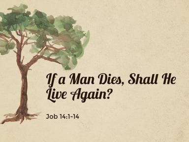 If a Man Dies, Shall He Live Again?