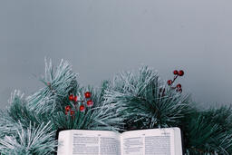 Bible Open to the Christmas Story with Greenery and Berries  image 2
