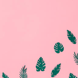Tropical Leaves on Pink Background  image 8