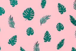 Tropical Leaves on Pink Background  image 7