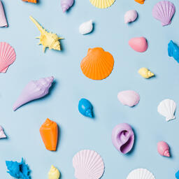 Painted Sea Shells on Blue Background  image 10