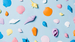 Painted Sea Shells on Blue Background  image 5