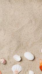 Sea Shells on Sandy Beach  image 8