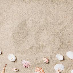 Sea Shells on Sandy Beach  image 20