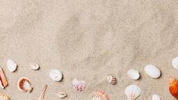 Sea Shells on Sandy Beach  image 16