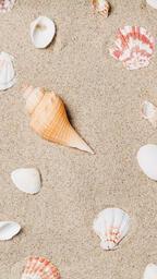 Sea Shells on Sandy Beach  image 9