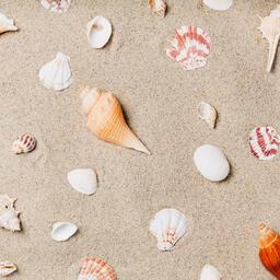 Sea Shells on Sandy Beach  image 4