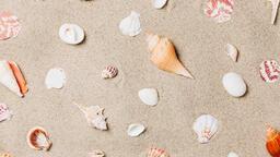 Sea Shells on Sandy Beach  image 11