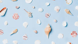 Sea Shells on Blue Background  image 2