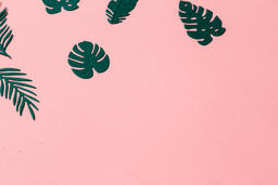 Tropical Leaves on Pink Background  image 2