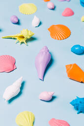 Painted Sea Shells on Blue Background  image 20