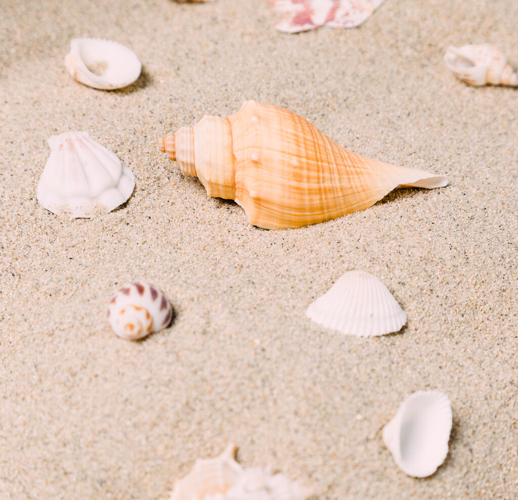 Sea Shells on Sandy Beach large preview