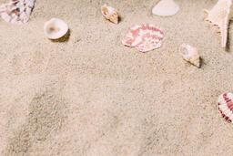 Sea Shells on Sandy Beach  image 19