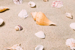 Sea Shells on Sandy Beach  image 15