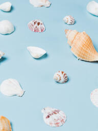 Sea Shells on Blue Background  image 17
