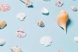 Sea Shells on Blue Background  image 19