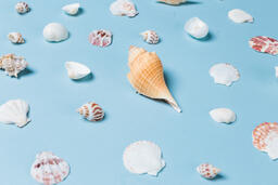 Sea Shells on Blue Background  image 22