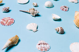 Sea Shells on Blue Background  image 4