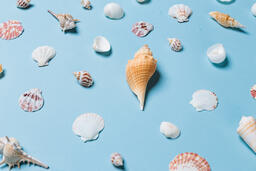 Sea Shells on Blue Background  image 18