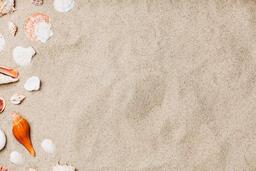 Sea Shells on Sandy Beach  image 22