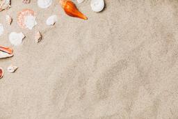 Sea Shells on Sandy Beach  image 13