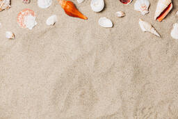 Sea Shells on Sandy Beach  image 7
