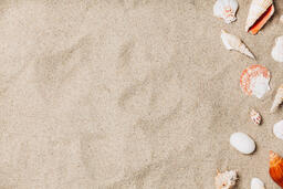 Sea Shells on Sandy Beach  image 14