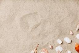 Sea Shells on Sandy Beach  image 21