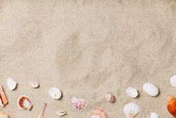 Sea Shells on Sandy Beach  image 12