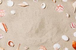 Sea Shells on Sandy Beach  image 6