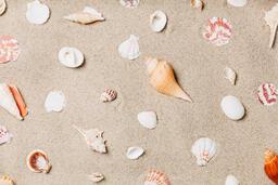 Sea Shells on Sandy Beach  image 5