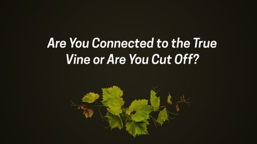 Are You Connected to the True Vine or Are You Cut Off?