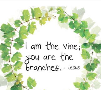 John 15 - Jesus is the vine, we are the branches