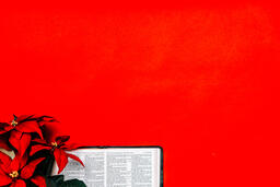 Open Bible with a Red Poinsettia  image 1