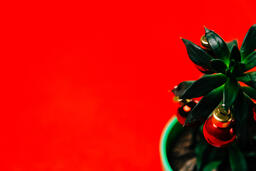 Tropical Plant with Christmas Ornaments and Gifts  image 2