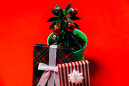 Tropical Plant with Christmas Ornaments and Gifts  image 6