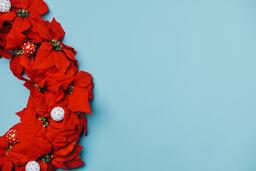 Red Poinsettia Wreath  image 3