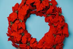 Red Poinsettia Wreath  image 2