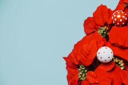 Red Poinsettia Wreath  image 9