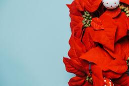 Red Poinsettia Wreath  image 7