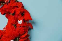 Red Poinsettia Wreath  image 5