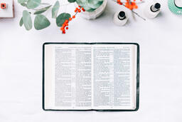 Open Bible with Christmas Florals  image 3