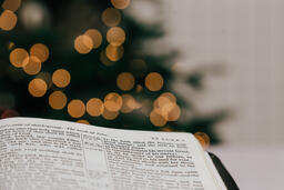 Open Bible in Front of the Christmas Tree  image 5